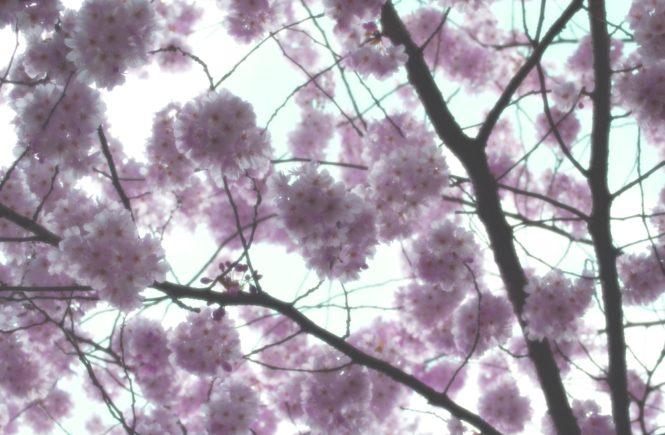 was man sich im april vornehmen sollte April Plan Vorhaben Ideen Inspiration