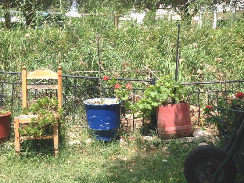 Herbst, Herbststimmung, urban gardening, Klimawandel, zu Hause, Gärtnern, Pflanzen