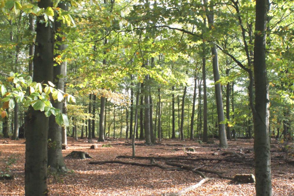 Herbst, November, 5Faf, #5faf, fünf Fragen am Fünften, formstilblog
