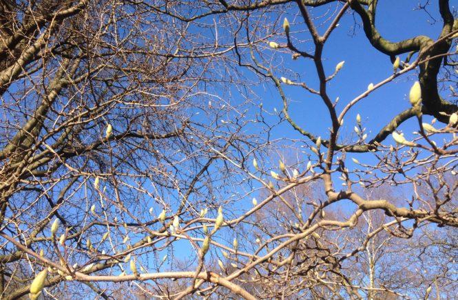 Frühling Februar Düsseldorf Inspiration