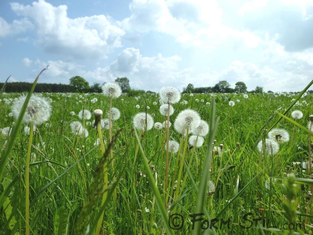 Sommer, Wiese, Grün, Was man sich im Juni vornehmen sollte, Planung, Sommerwiese, Midsommar, Sommersonnenwende